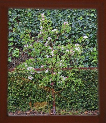 apple-rain_sm