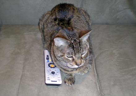 bob-remote