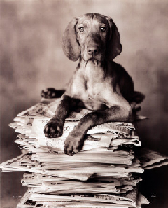 dog-on-newspapers_sm